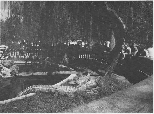 15 Mangan Plaza lagartos.jpg